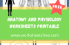 Anatomy Blank Worksheets